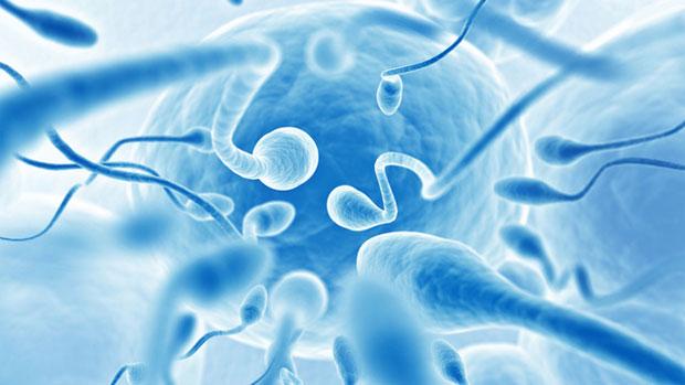 improve sperm coutn