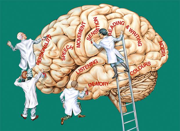 brain memory parts