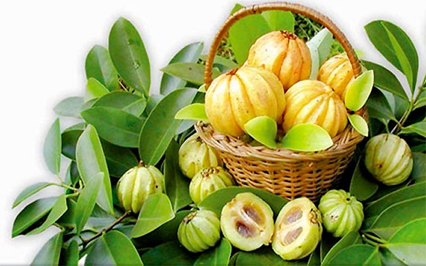 Garcinia-Cambogia-leaves