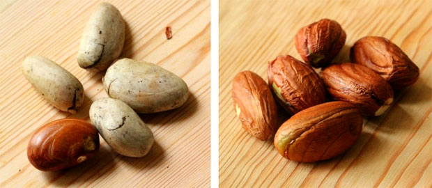 seeds of jack fruit