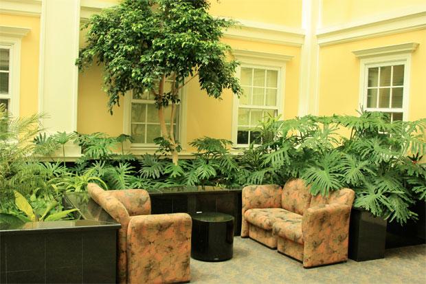 green plants inside home