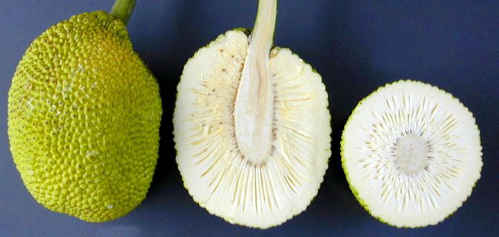 bread fruit cut opened