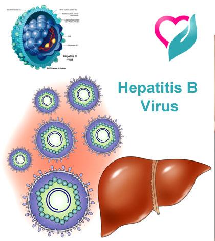 Hepatitis-B virus