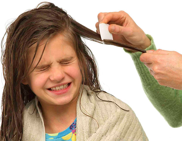 combing the lice