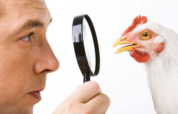 chicken check