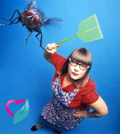 fighting housefly