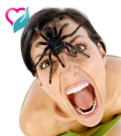 spider bite remedies